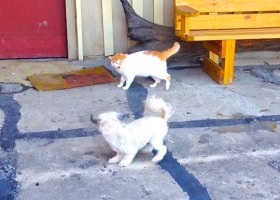Delta Cat Trumps Delta Dog. Dandy and Shady at Quapaw Canoe Company on a cold winter day in the Mississippi Delta.